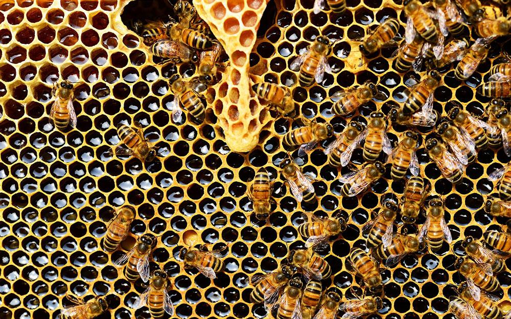 Il dolce segreto del mondo delle api