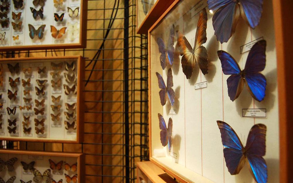 Museo di Storia Naturale - Macerata